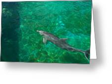 Waiting Porpoise  Greeting Card