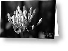 Waiting To Blossom Into Beauty - Bw Greeting Card
