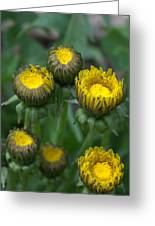 Wake Up Dandelions Greeting Card