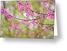 Waking Blooms Greeting Card
