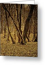 Wald Forest Greeting Card