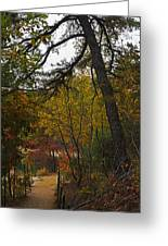 Walden Pond Path Into The Forest 2 Greeting Card