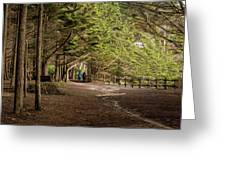 Walk Among The Trees Greeting Card