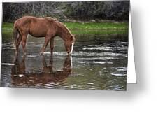 Walk Horse In Salt River Greeting Card