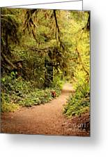 Walk Into The Forest Greeting Card