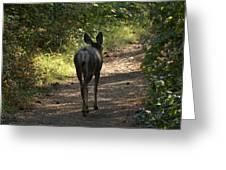 Walk On Greeting Card