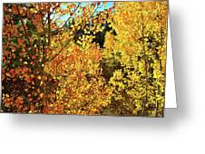 Walking Among The Aspens At Dillon Reservoir Greeting Card