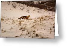Walking Fox Greeting Card