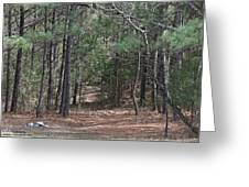 Walking In The Pine Forest Greeting Card