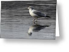 Walking On Water 4850 Greeting Card