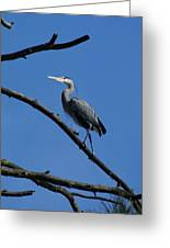 Walking The High Branch Greeting Card