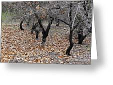Walking Trees. Greeting Card