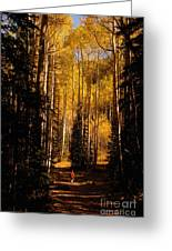Walking With Aspens Greeting Card
