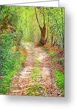 Walkway In Secluded Deciduous Forest Greeting Card