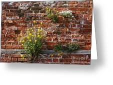 Wall Flowers Greeting Card