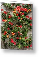 Wall Of Roses Greeting Card