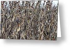 Wall Of Weeds - 2 Greeting Card