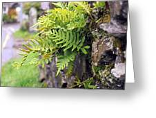 Wall With Fern Greeting Card