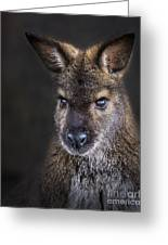 Wallaby Portrait Greeting Card