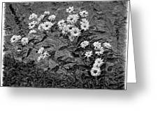 Wallflower Ain't So Bad Bw Greeting Card