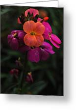 Wallflower Beauties Greeting Card