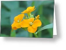 Wallflower Orange Greeting Card