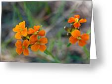 Wallflower Wildflower Greeting Card