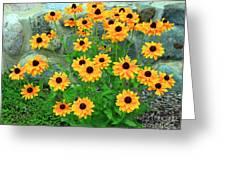 Wallflowers Greeting Card