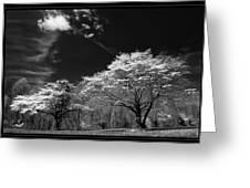 Walnut Creek Dogwoods Greeting Card