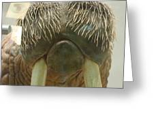 Walrus Whiskers Greeting Card