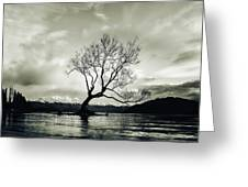 Wanaka Tree - New Zealand  Greeting Card