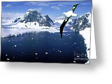 Wandering Albatross Over The Le Maire Channel Greeting Card