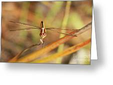 Wandering Glider Dragonfly Greeting Card