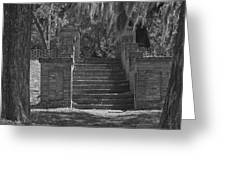 Wandering Steps Greeting Card