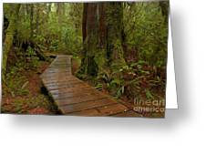 Wandering Through The Rainforest Greeting Card