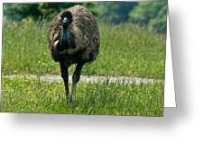 Wanding Ostrich Greeting Card
