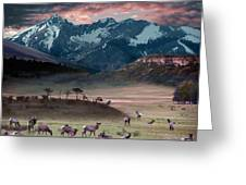 Wapiti Heaven Greeting Card
