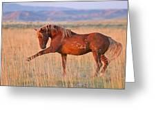 War Horse Greeting Card by Sandy Sisti