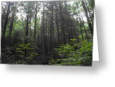 War Women Dell Forest Greeting Card