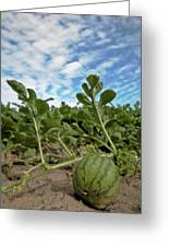 Warermelon On The Vine Greeting Card