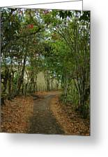 Wariman Pathway Greeting Card