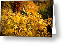 Warm Fall Colors Greeting Card