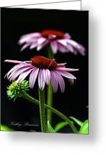 Warm Lavender Coneflower Greeting Card