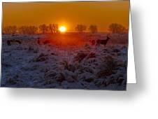 Warm Sunrise In Winter Greeting Card