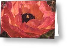 Warm Tone Ranunculus Greeting Card