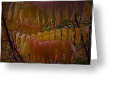 Warmth Of Autumn Greeting Card