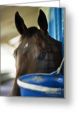 Wary Racehorse Greeting Card
