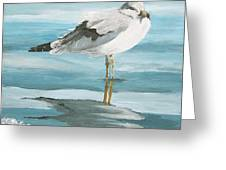 Wary Seagull 2 Greeting Card