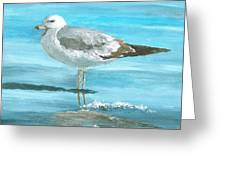 Wary Seagull Greeting Card