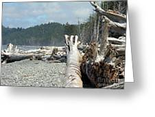 Washington Beach Greeting Card